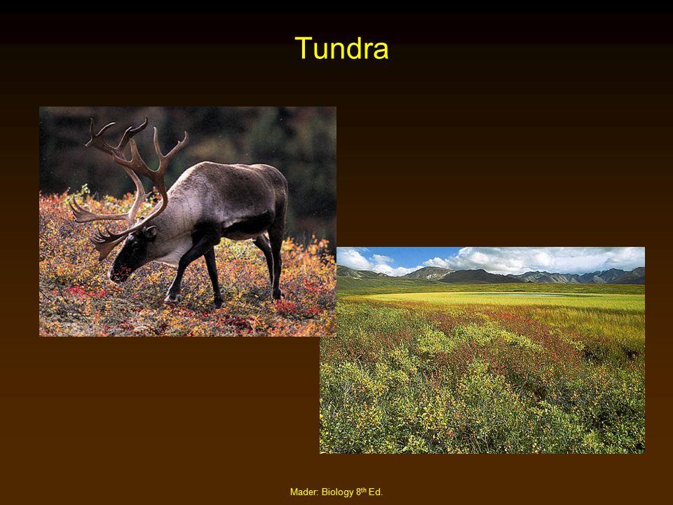 Tundra Mader: Biology 8th Ed.