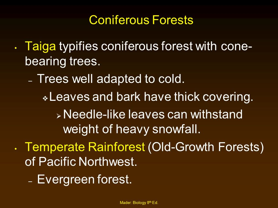 Taiga typifies coniferous forest with cone-bearing trees.