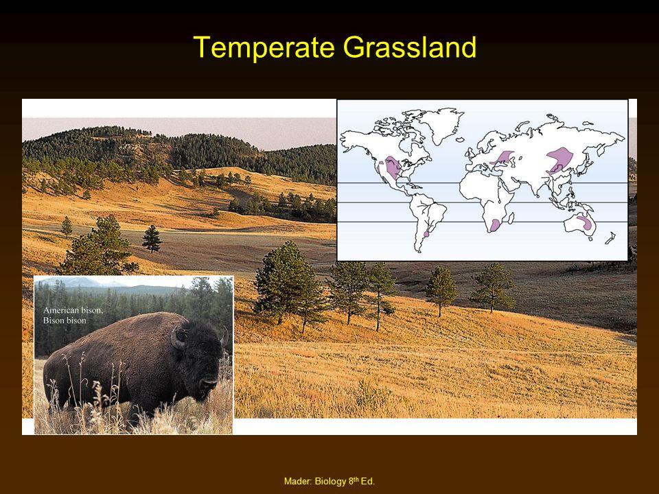 Temperate Grassland Mader: Biology 8th Ed.