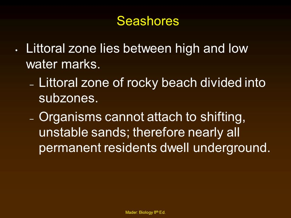 Littoral zone lies between high and low water marks.