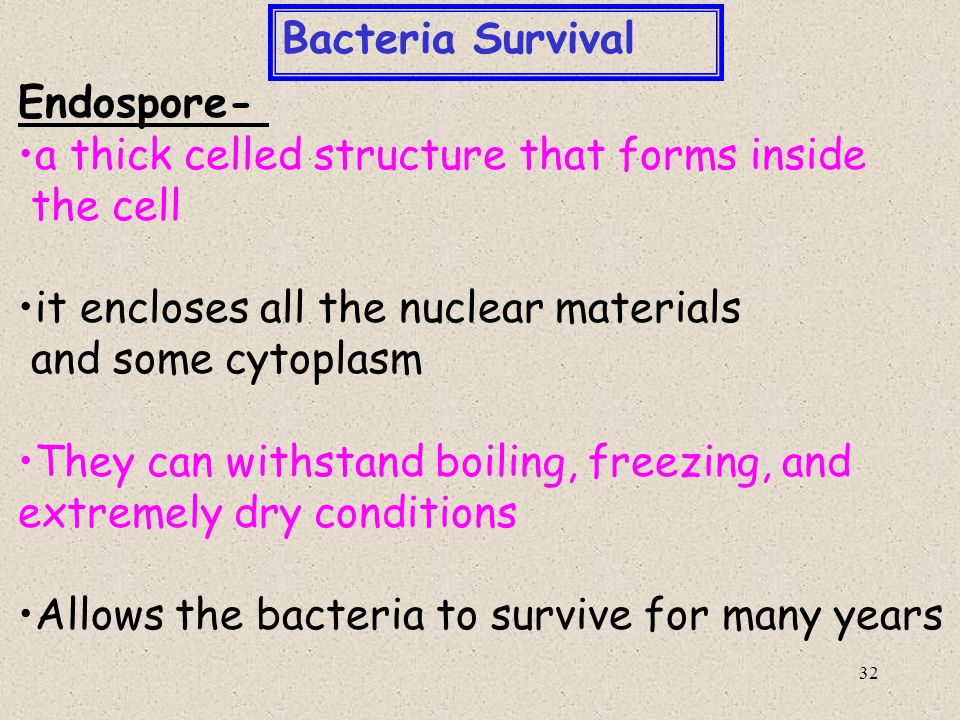Bacteria Survival Endospore- a thick celled structure that forms inside. the cell. it encloses all the nuclear materials.