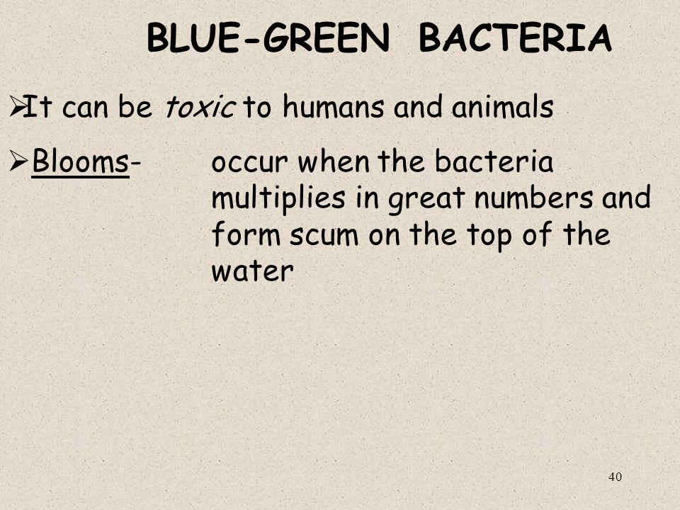 BLUE-GREEN BACTERIA It can be toxic to humans and animals