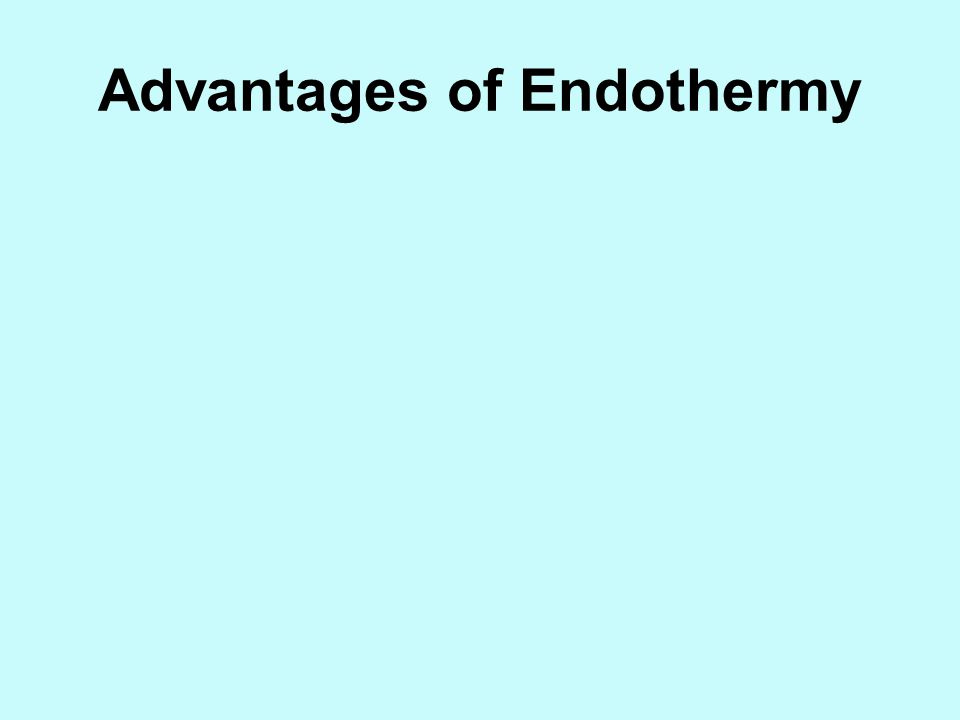 Advantages of Endothermy