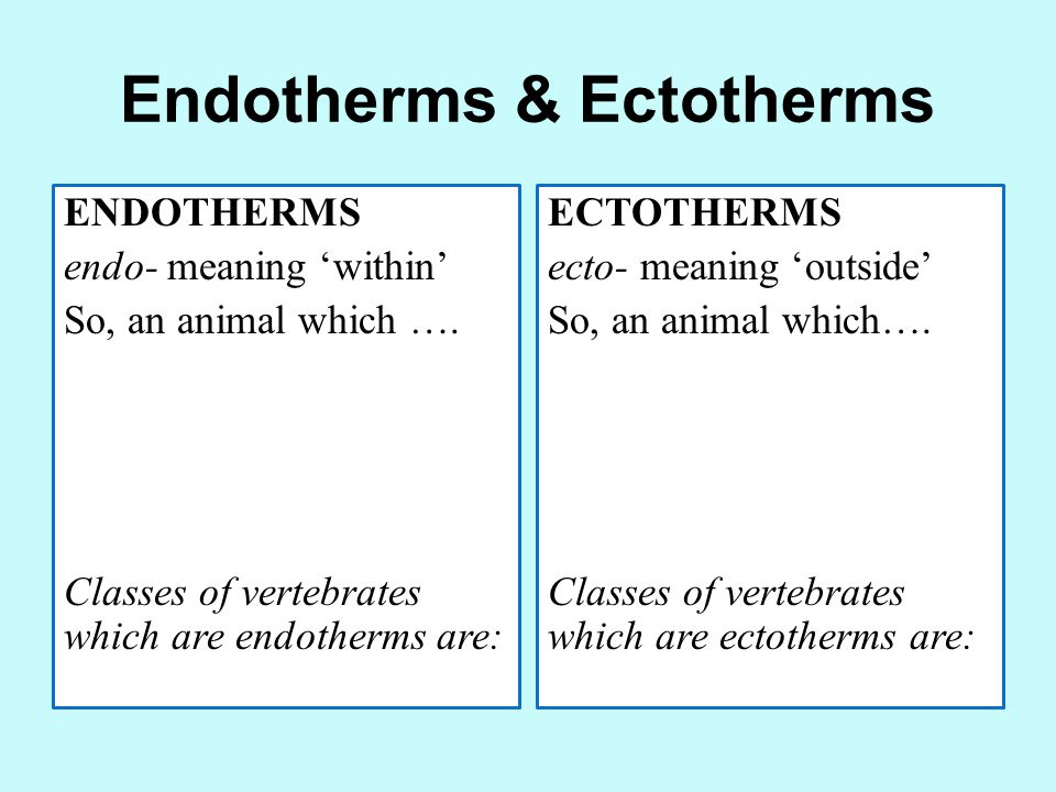 Endotherms & Ectotherms