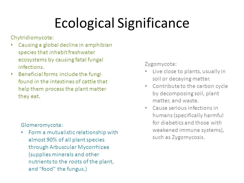 Ecological Significance