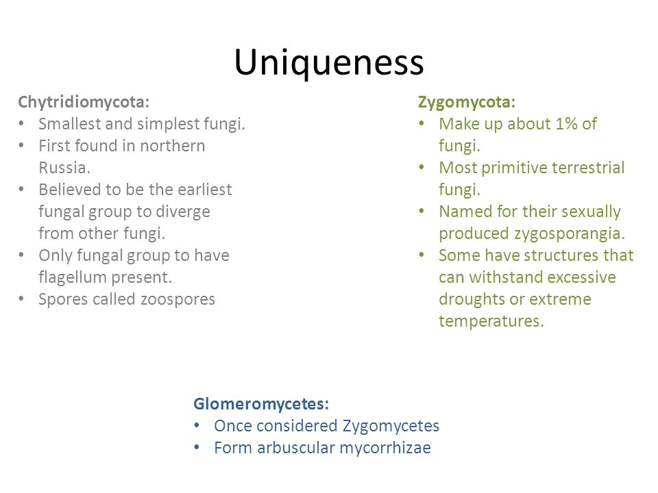 Uniqueness Chytridiomycota: Smallest and simplest fungi.