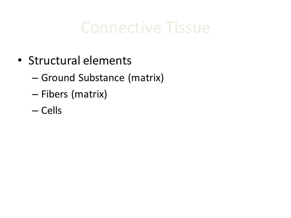 Connective Tissue Structural elements Ground Substance (matrix)
