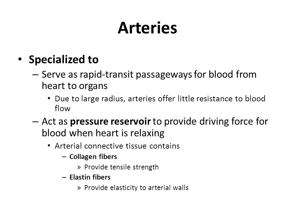 Arteries Specialized to