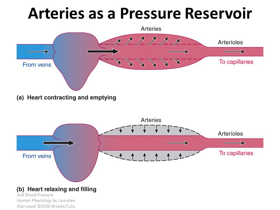 Arteries as a Pressure Reservoir