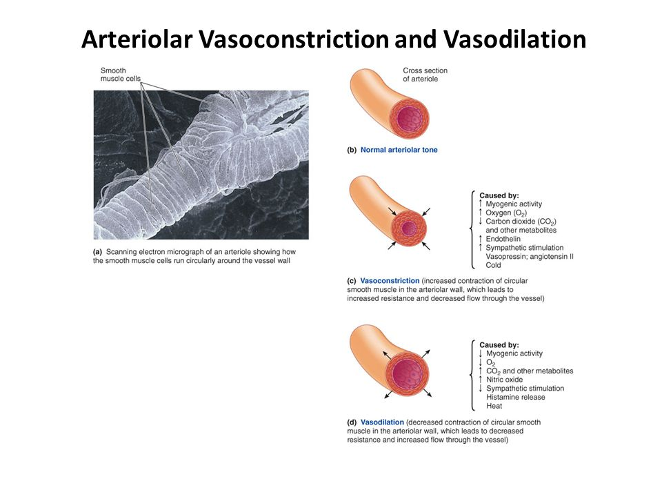 Arteriolar Vasoconstriction and Vasodilation