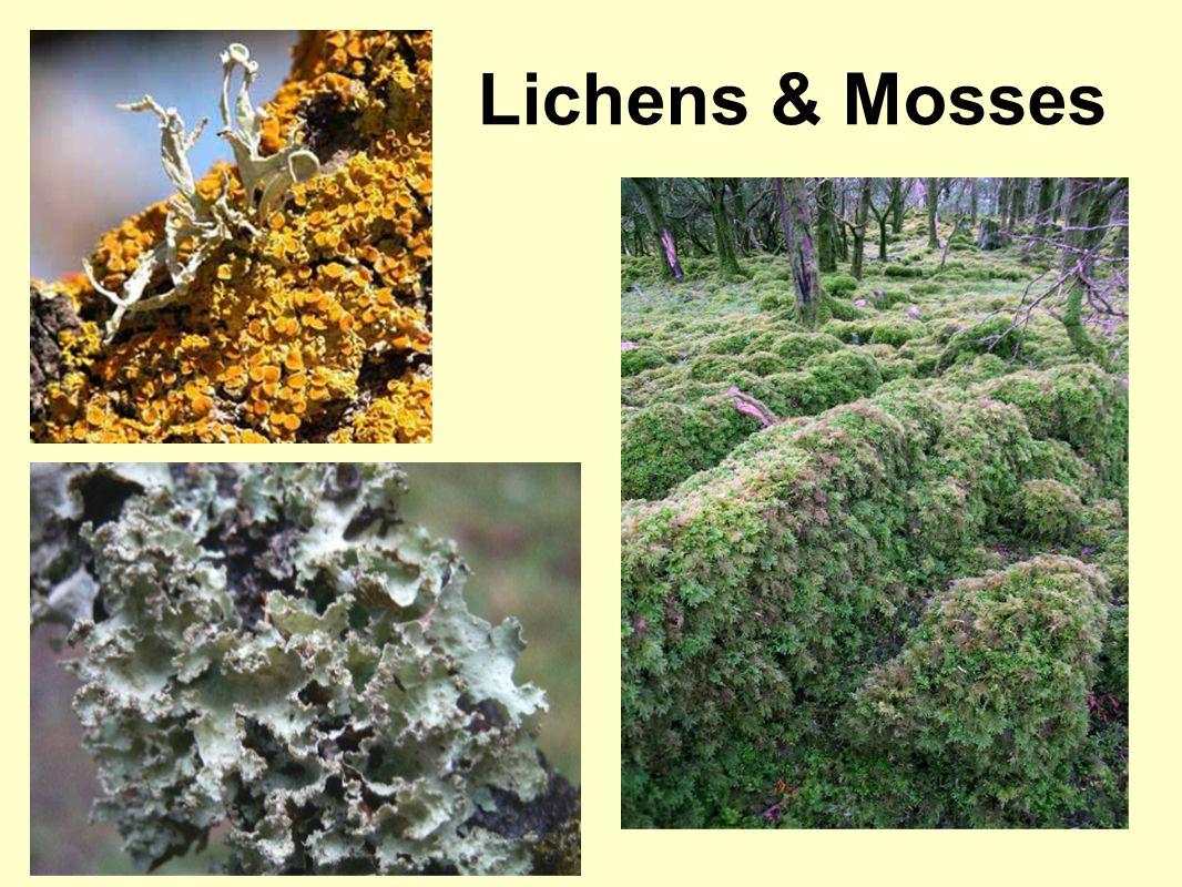 Lichens & Mosses