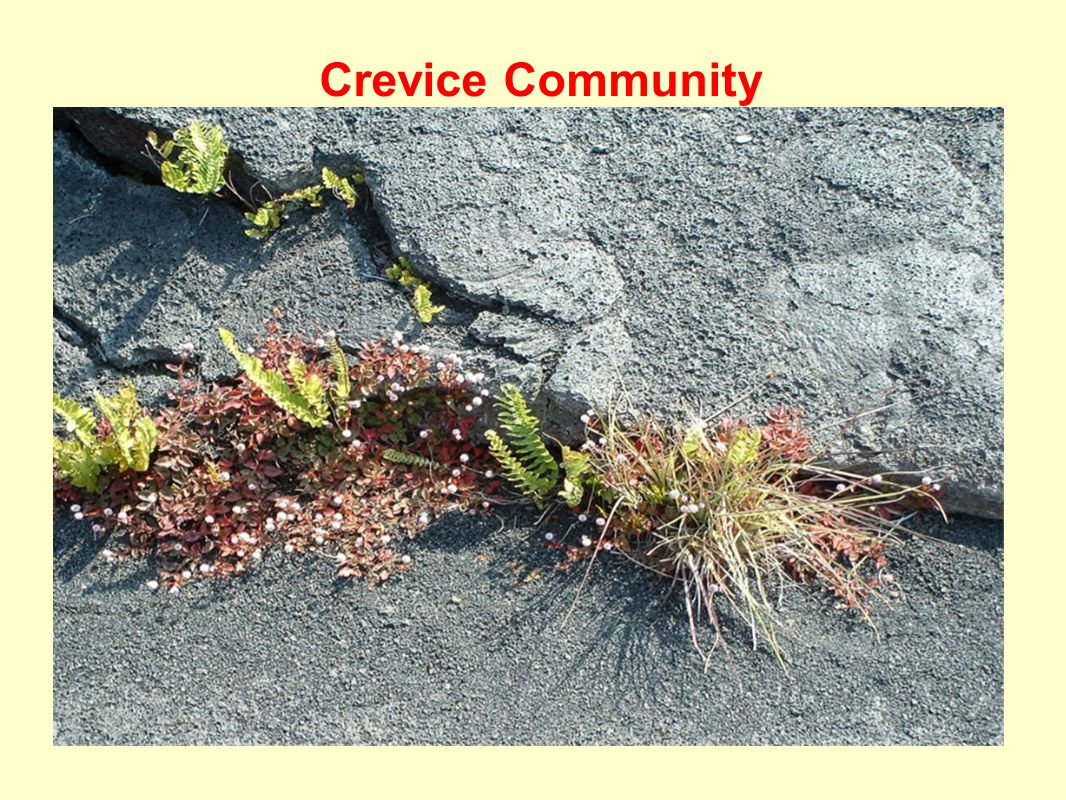 Crevice Community