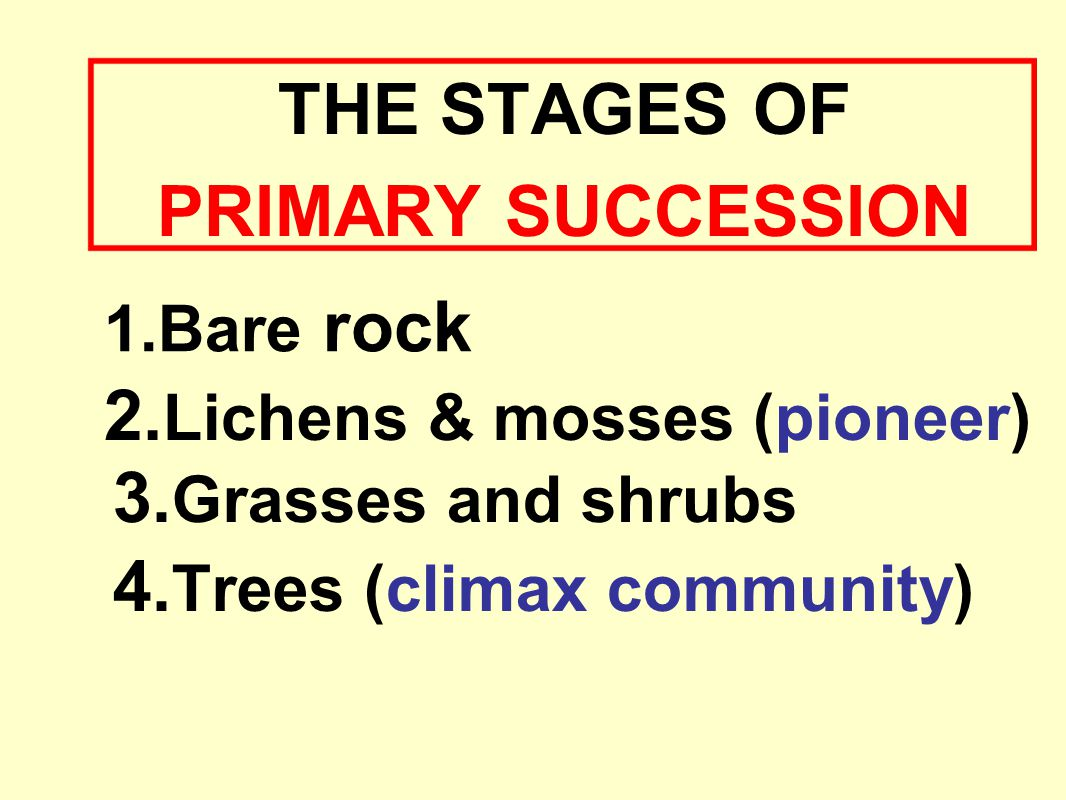 2.Lichens & mosses (pioneer)