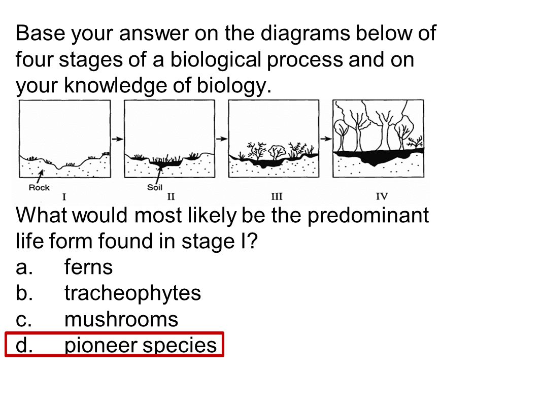 Base your answer on the diagrams below of four stages of a biological process and on your knowledge of biology.