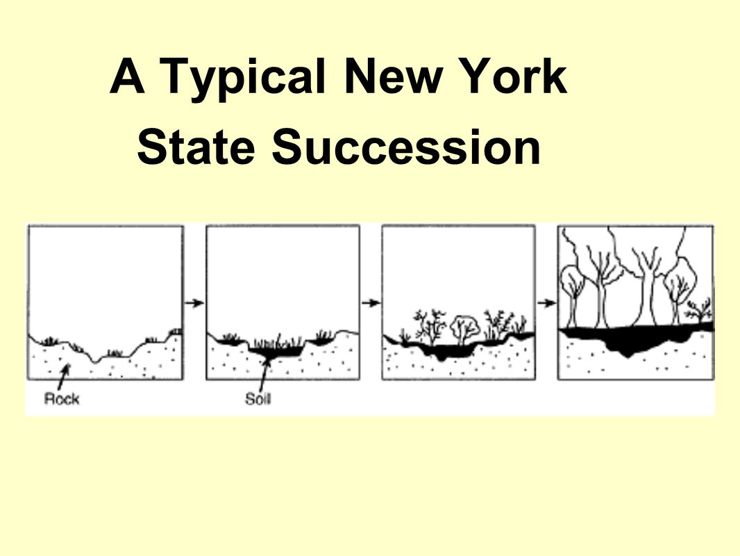 A Typical New York State Succession