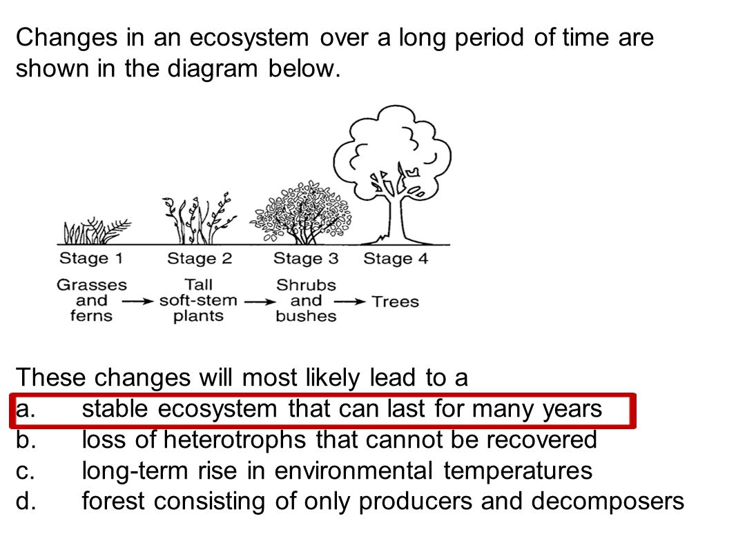 Changes in an ecosystem over a long period of time are shown in the diagram below.
