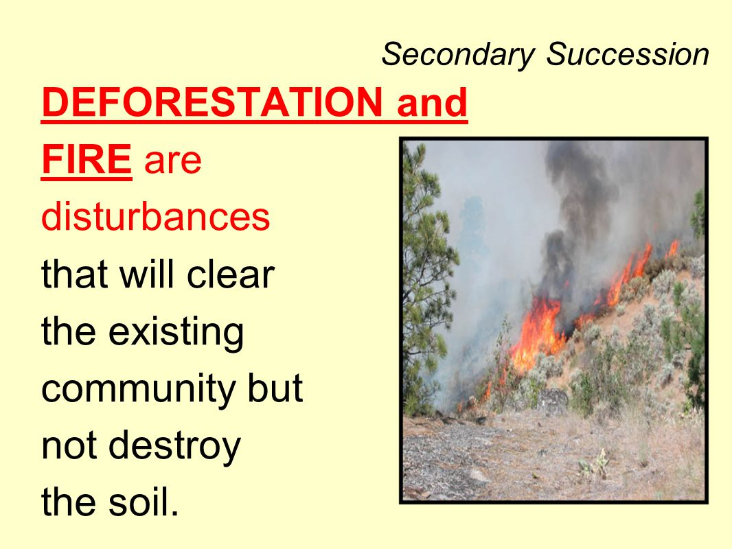 Secondary Succession DEFORESTATION and FIRE are disturbances that will clear the existing community but not destroy the soil.