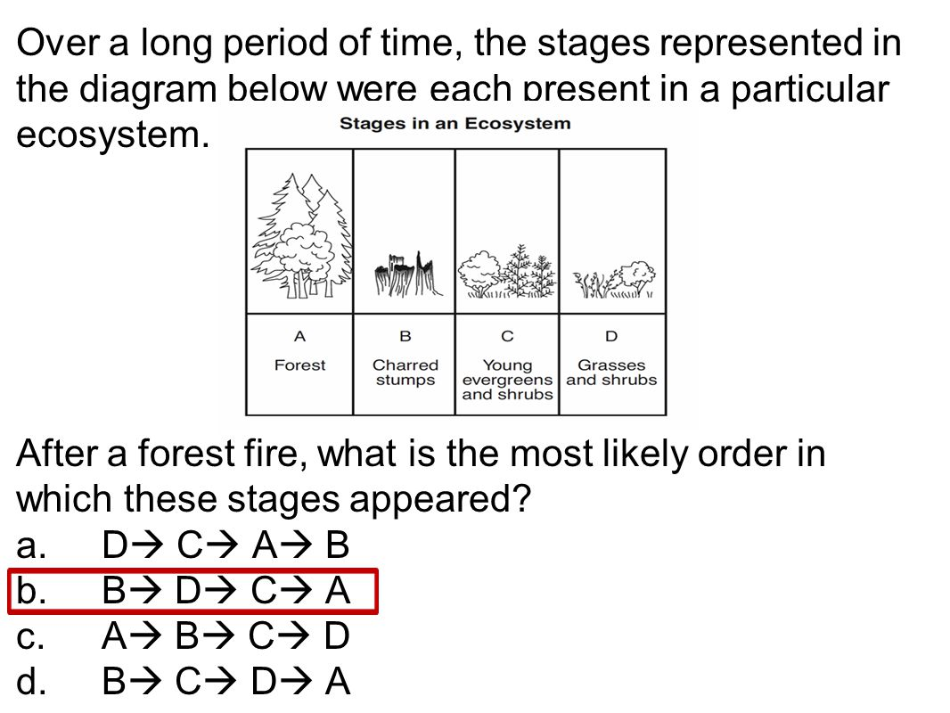 Over a long period of time, the stages represented in the diagram below were each present in a particular ecosystem.