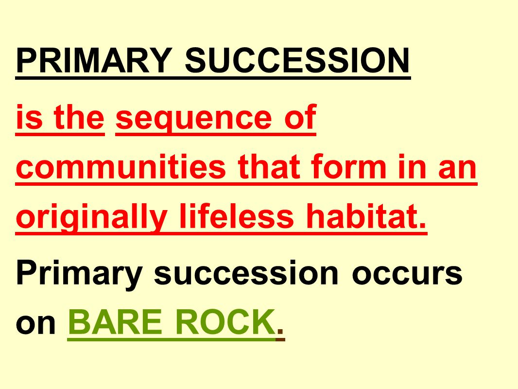 Primary succession occurs on BARE ROCK.