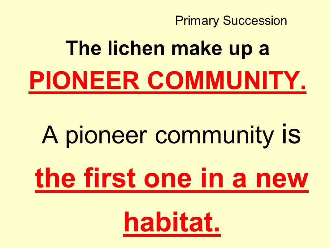 The lichen make up a PIONEER COMMUNITY.