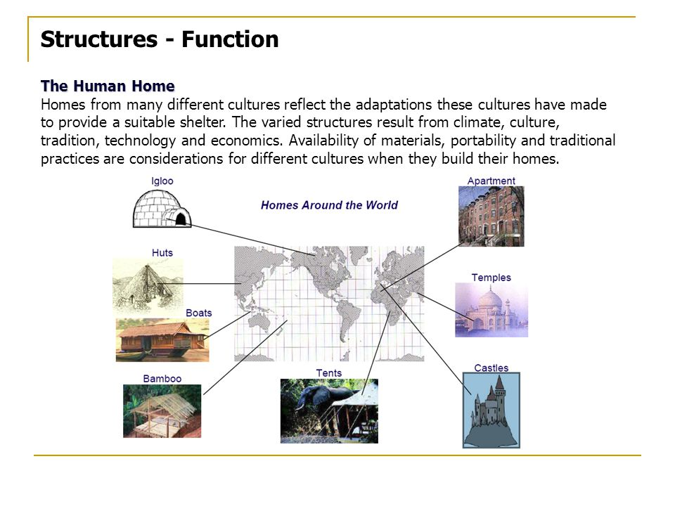 Structures - Function The Human Home