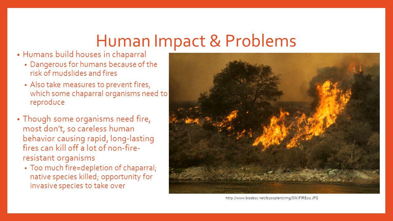 Human Impact & Problems
