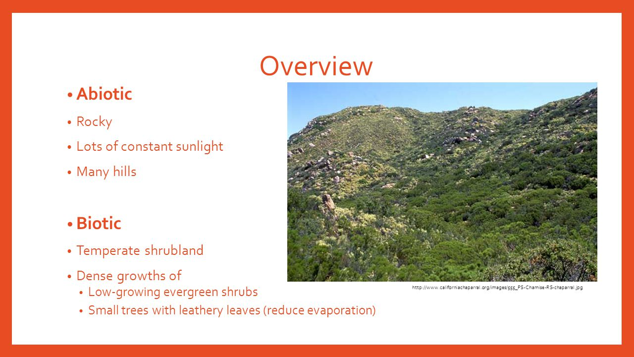 Overview Abiotic Biotic Rocky Lots of constant sunlight Many hills