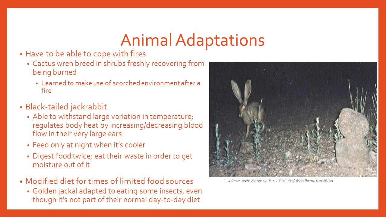 Animal Adaptations Have to be able to cope with fires