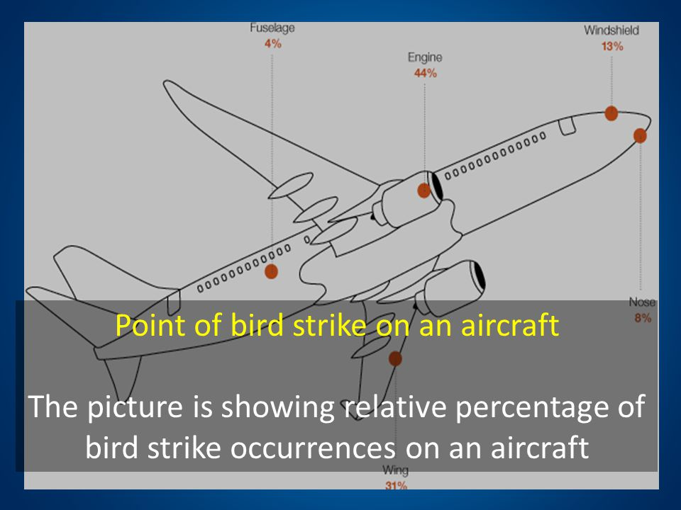 Point of bird strike on an aircraft