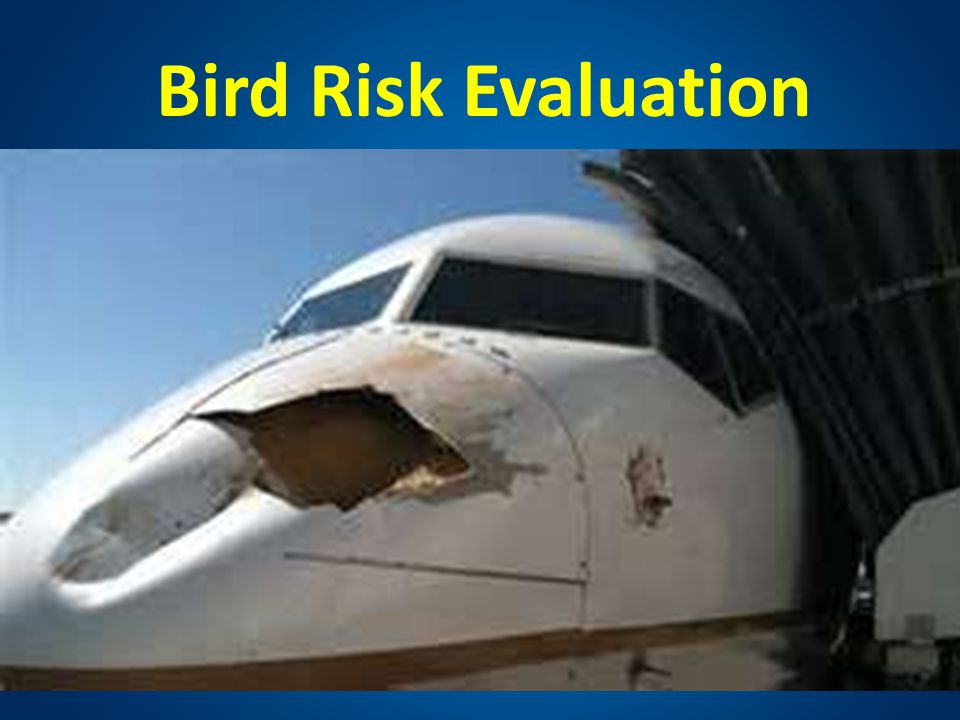 Bird Risk Evaluation HOW Evaluate aircraft risks