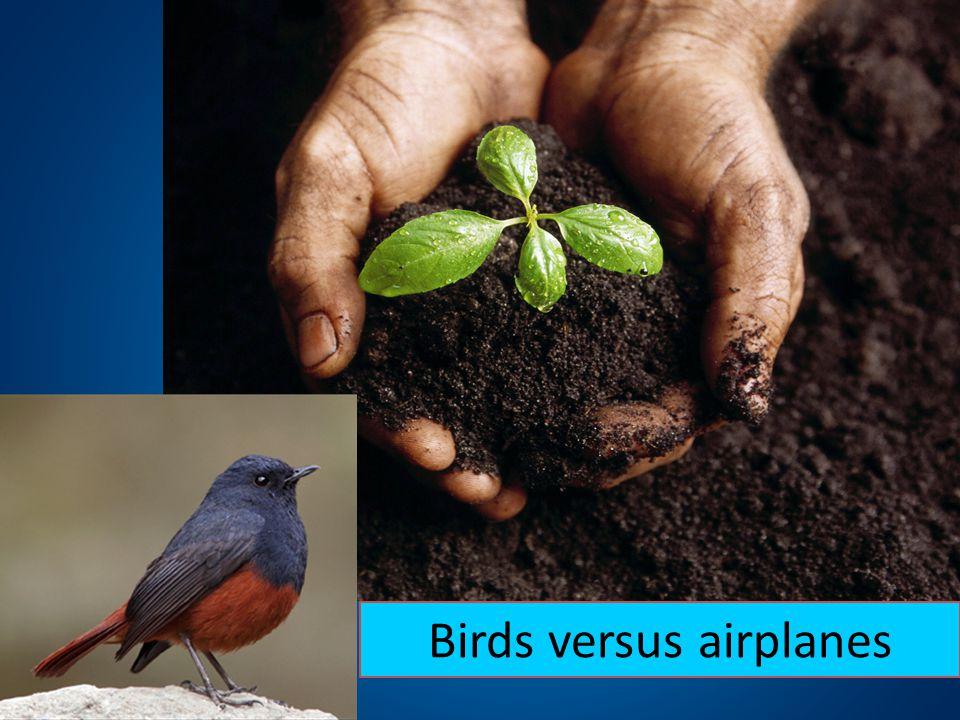 Birds versus airplanes
