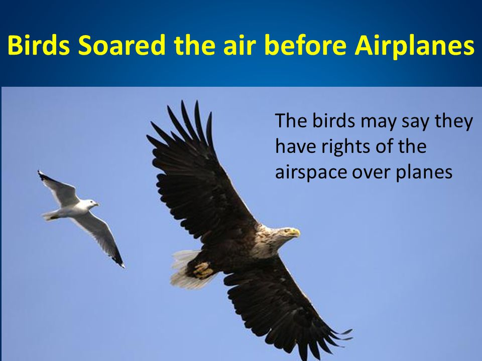 Birds Soared the air before Airplanes