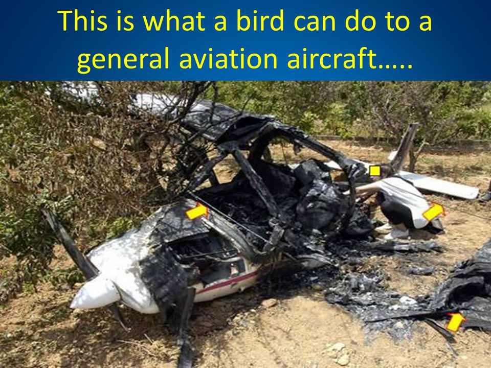 This is what a bird can do to a general aviation aircraft…..