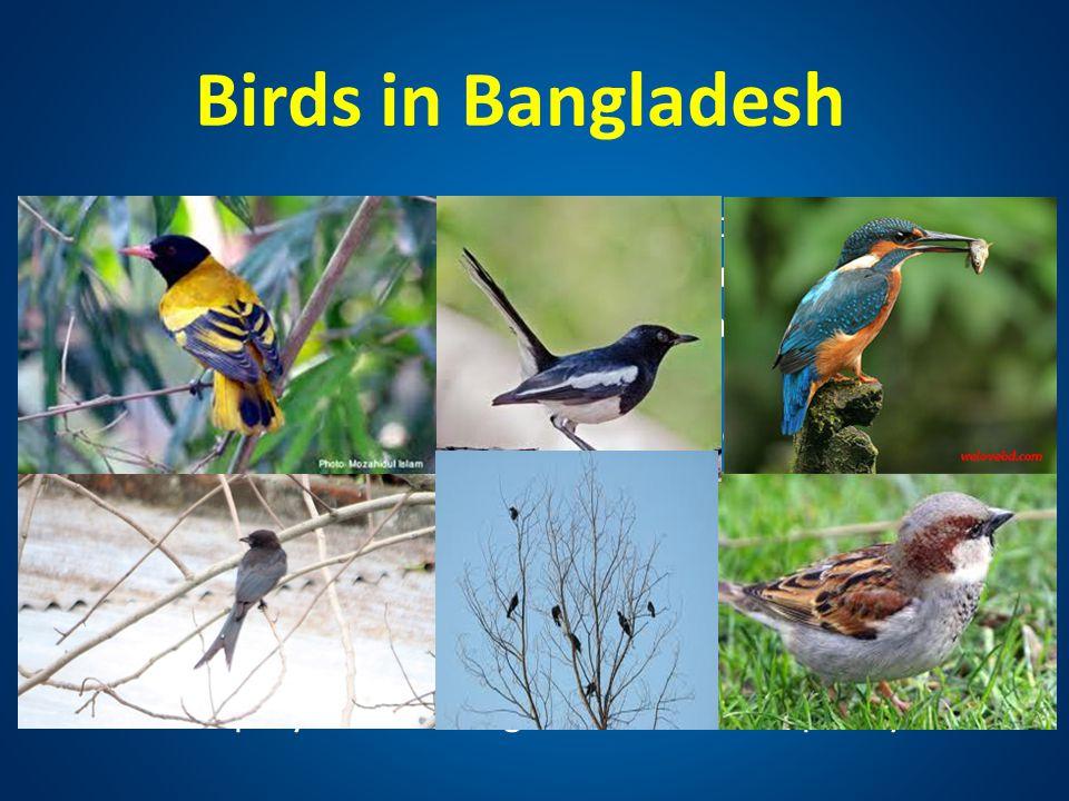 Birds in Bangladesh