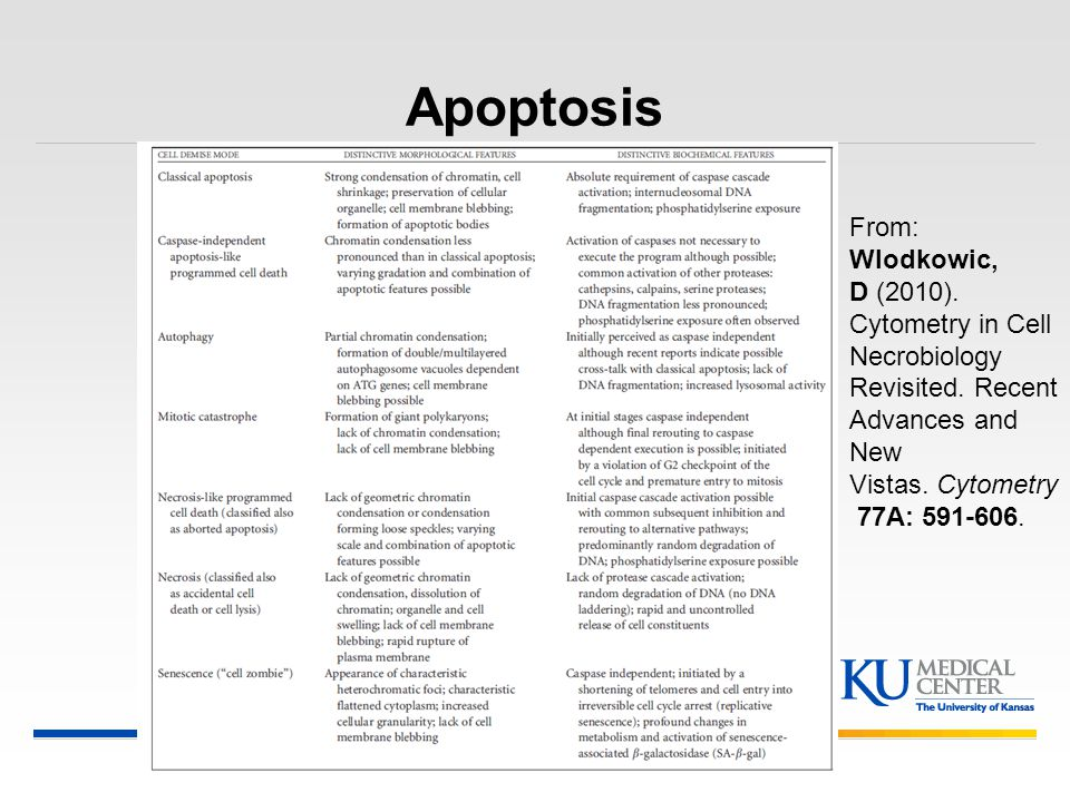 Apoptosis From: Wlodkowic, D (2010). Cytometry in Cell Necrobiology Revisited. Recent Advances and New Vistas. Cytometry 77A: 591-606.