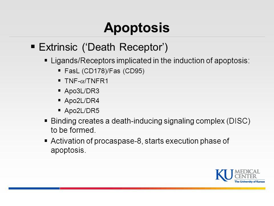 Apoptosis Extrinsic ('Death Receptor')