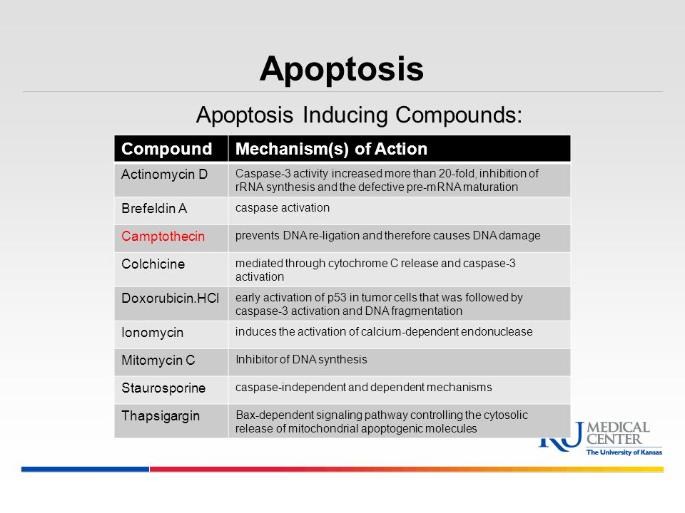 Apoptosis Inducing Compounds: