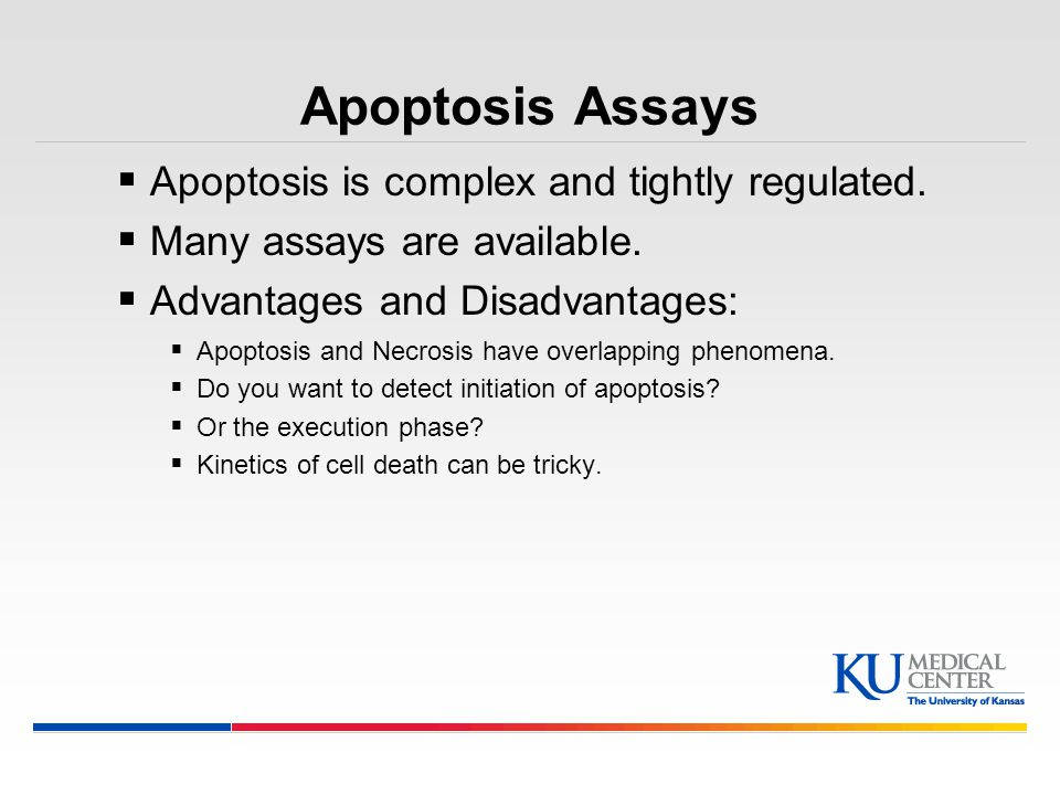 Apoptosis Assays Apoptosis is complex and tightly regulated.