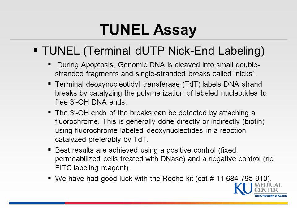 TUNEL Assay TUNEL (Terminal dUTP Nick-End Labeling)