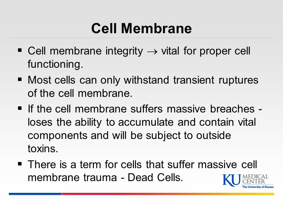 Cell Membrane Cell membrane integrity  vital for proper cell functioning. Most cells can only withstand transient ruptures of the cell membrane.