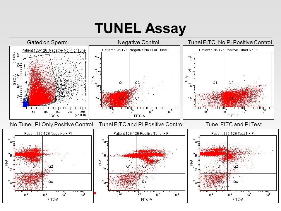 TUNEL Assay Gated on Sperm Negative Control