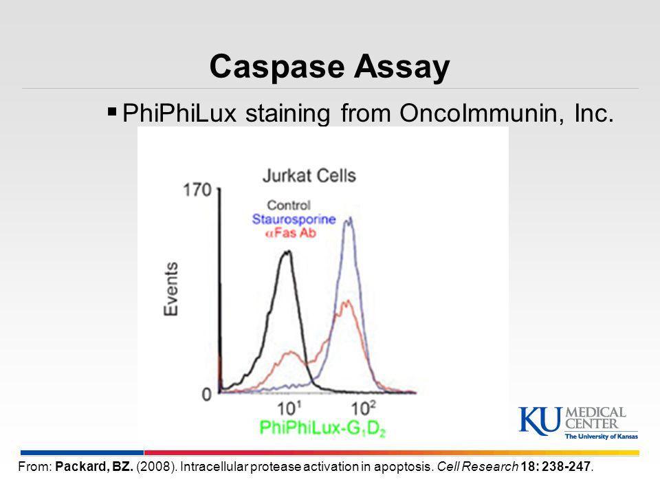 Caspase Assay PhiPhiLux staining from OncoImmunin, Inc.