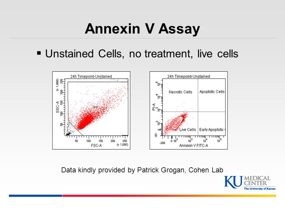 Annexin V Assay Unstained Cells, no treatment, live cells