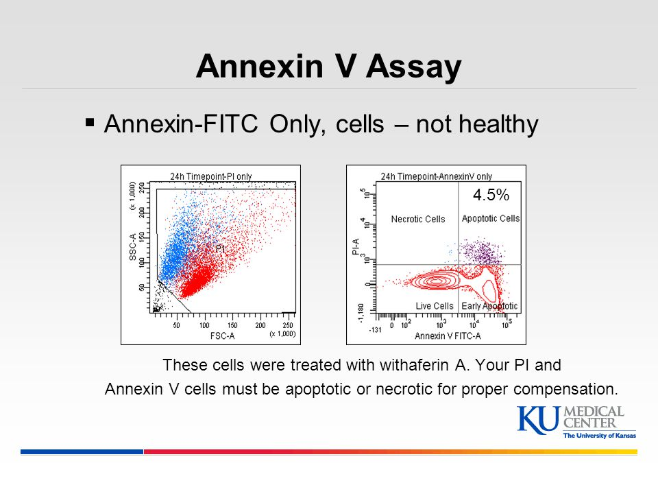 Annexin V Assay Annexin-FITC Only, cells – not healthy 4.5%