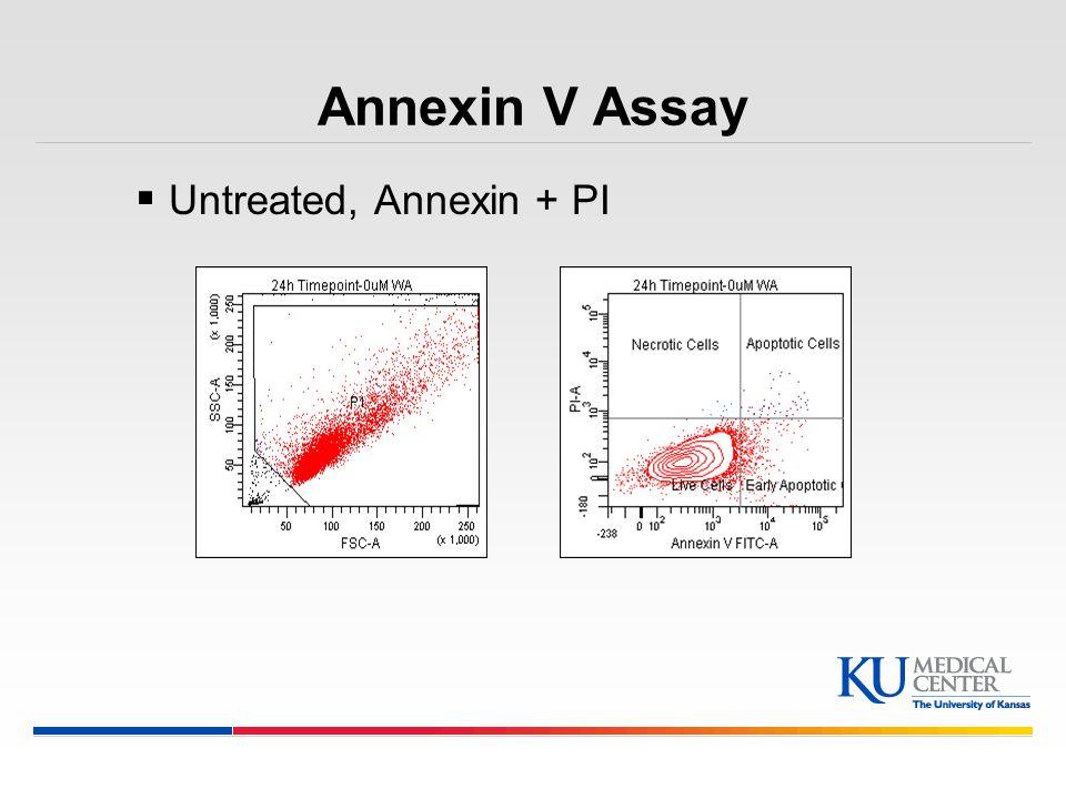 Annexin V Assay Untreated, Annexin + PI