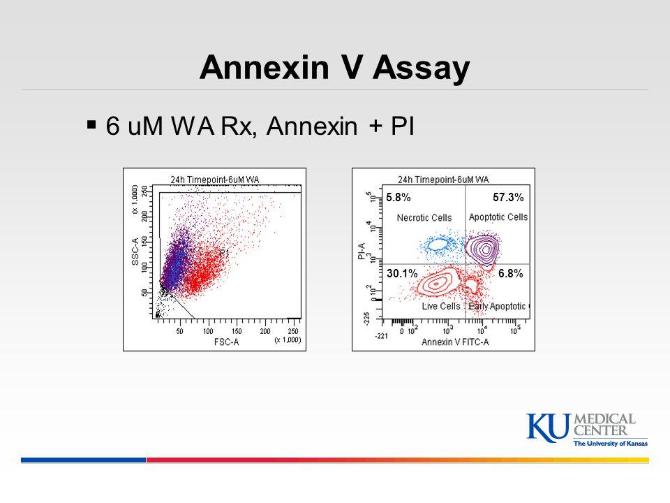 Annexin V Assay 6 uM WA Rx, Annexin + PI 5.8% 57.3% 30.1% 6.8%