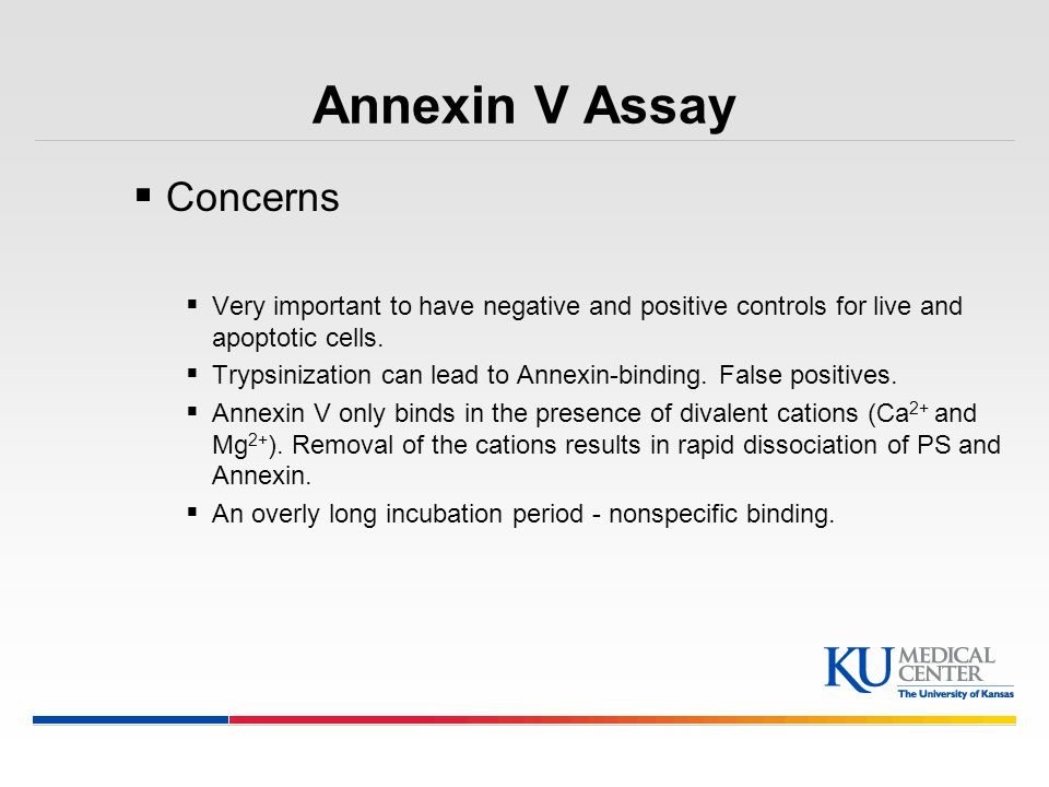 Annexin V Assay Concerns