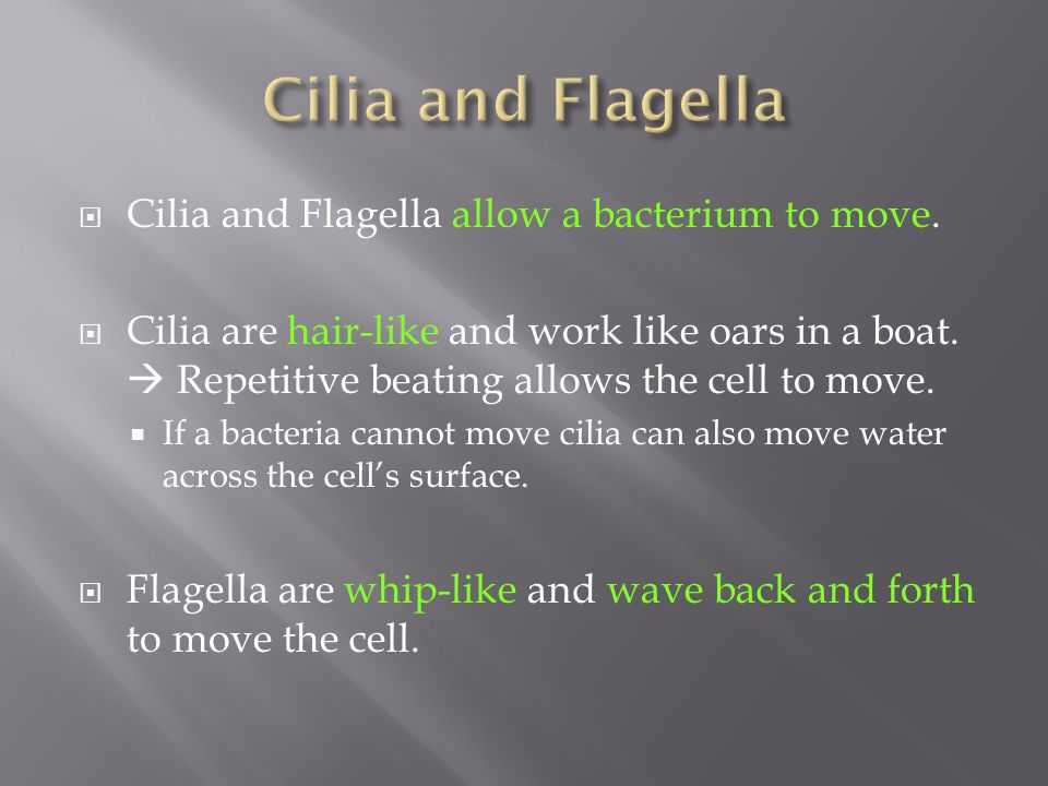 Cilia and Flagella Cilia and Flagella allow a bacterium to move.