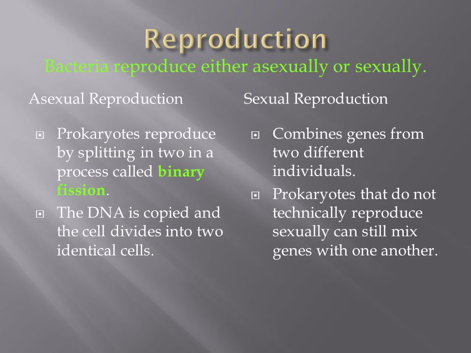 Bacteria reproduce either asexually or sexually.