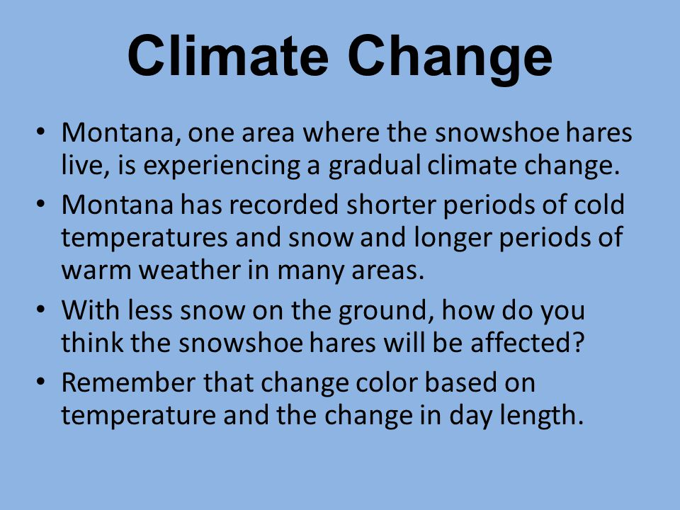 Climate Change Montana, one area where the snowshoe hares live, is experiencing a gradual climate change.